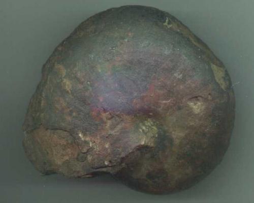 Ammonite Goniatites