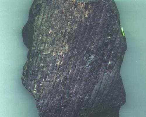 Corteccia di Sigillaria