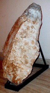 Museo_Geopaleontologico_Rocca_Nerinee